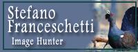 http://www.stefanofranceschetti.com